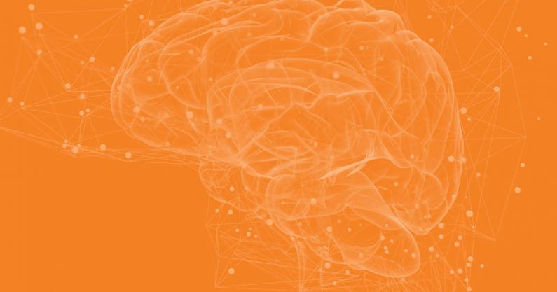 Geometric illustration of the brain and connectivity