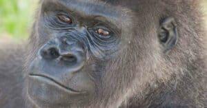 Close-up photo of Kumbuka.
