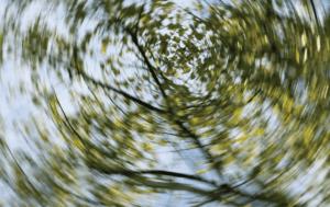 vertigo image of trees in a forest