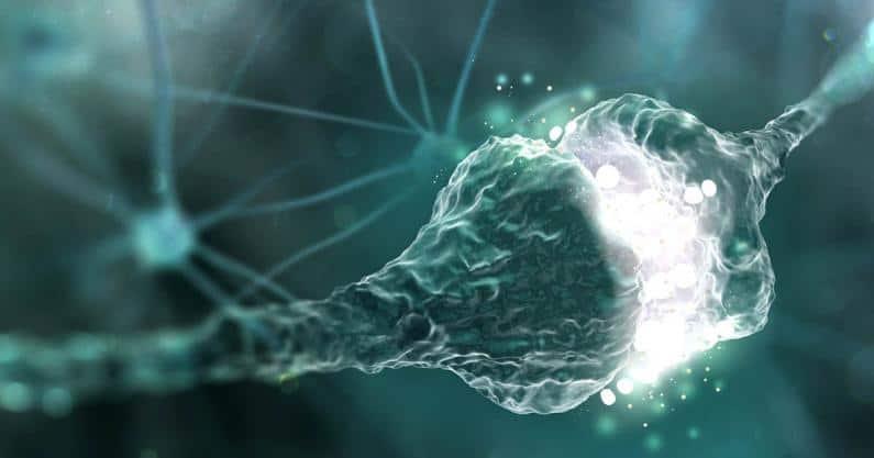 Synaptic transmission , Synapses , Human nervous system (3D illustration)