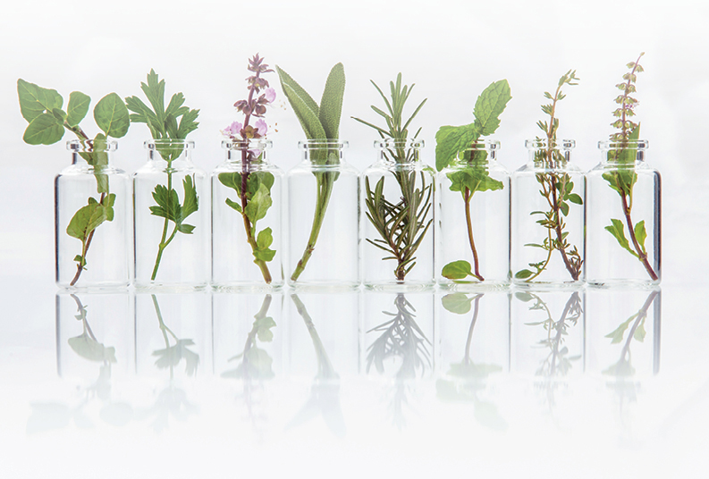 Essential herbs for oils